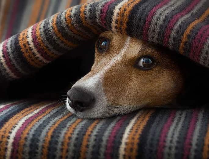 Hunde sind besonders Lärmempfindlich