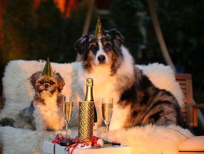 Hunde feiern Silvester