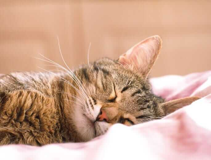 Katze Hummel schläft