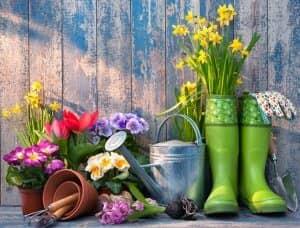 Blumen in Schuhen