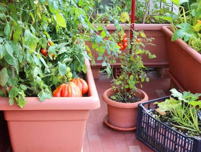 Balkongarten Gemüsekübel