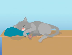 Richtige Atmung Katze
