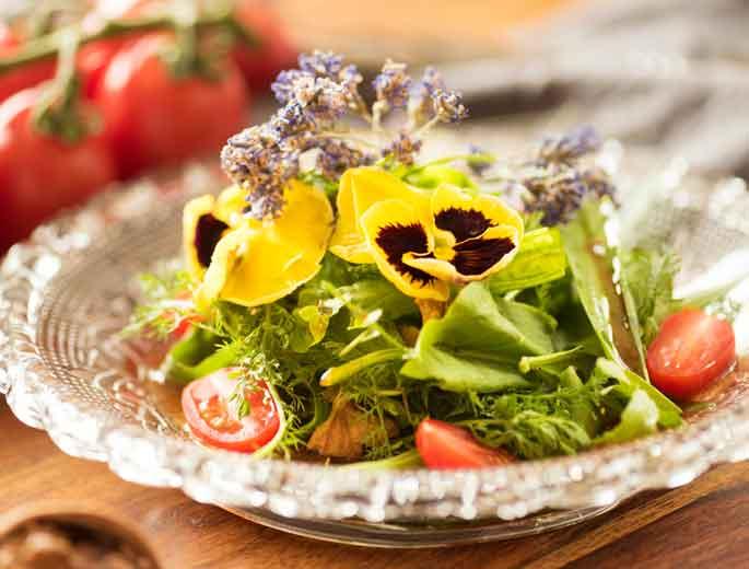 Basenfasten Detox-Kur Salat