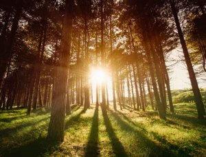 Herbst Sonnenstrahlen im Wald