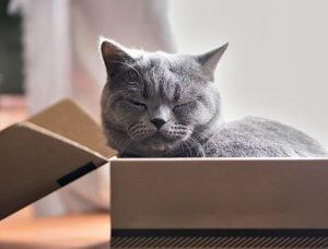 Katze in Box