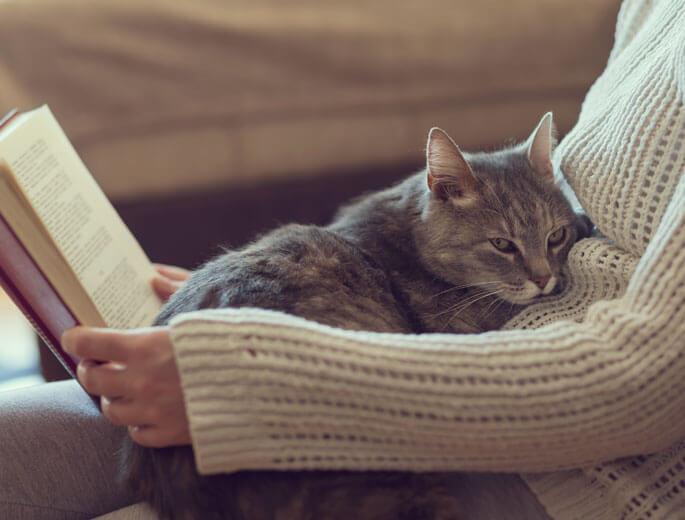 Katze auf dem Schoß