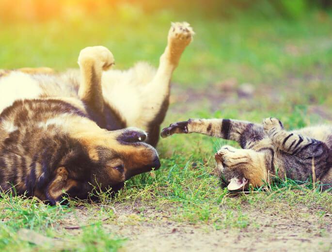 Hund und Katze spielen