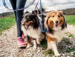 Hunde an Leine