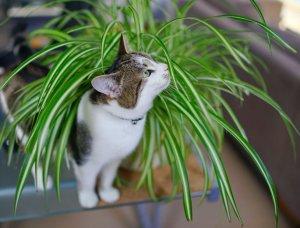 Katze mit Grünlilie