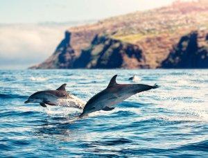 Madeira Delfine