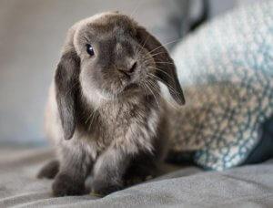 Kaninchen auf Sofa