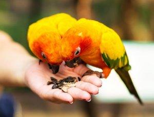Zwei Papageien auf einer Hand