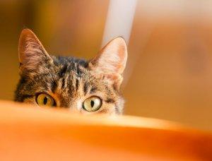 Eine versteckte Katze
