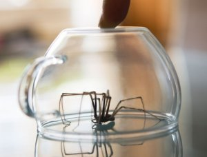 Spinne mit Glas fangen