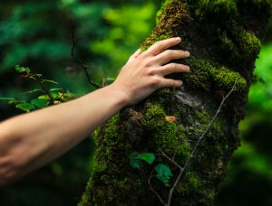 Hand auf Baumstamm