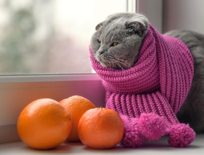Katze mit Schal