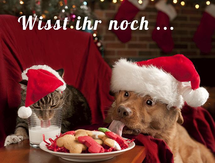 Katze und Hund an Weihnachten