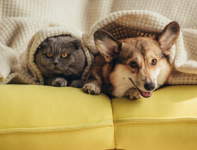 Hund Katze Decke