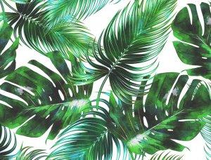 Tapete Palm blatter