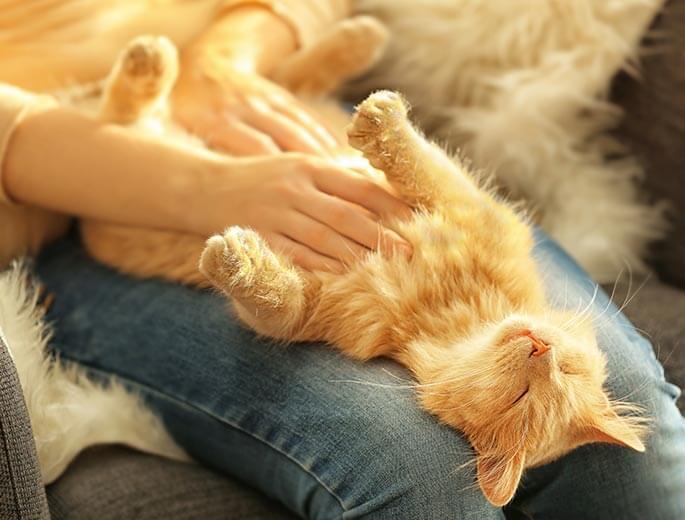 Katzen sind die beste Medizin